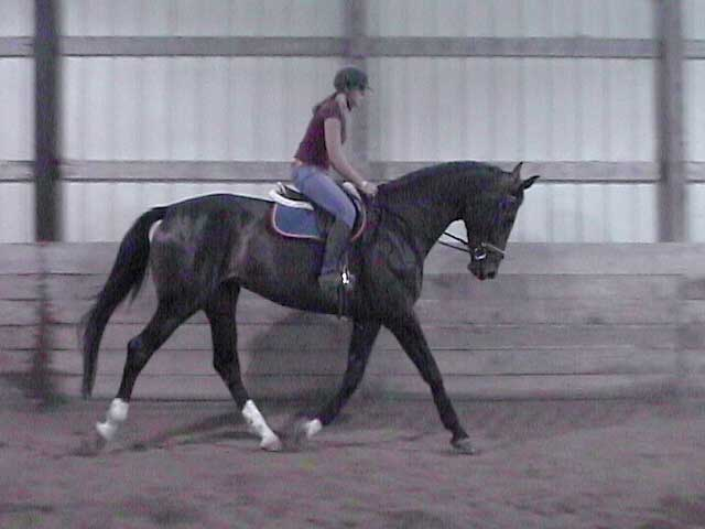 Ariel at the trot, June 2005