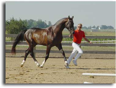 Apollo & Helmut at the Stallion Inspection, July 2005