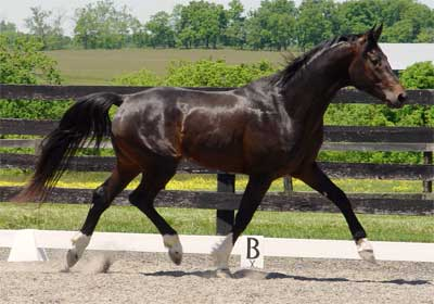Apollo 3 yr old stallion, May,2005