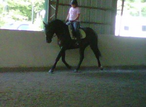 Meghan riding the young KO at eight months pregnant.