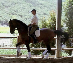 Legacy Farm will be hosting a dressage clinic with Pierre Cousyn April 19-21. Contact courtneyequineservices@yahoo.com for more details.